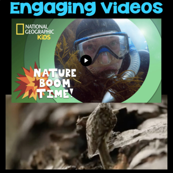 Watch a Video: Animal Homes or Kelp Forests - Second Grade Science Stations