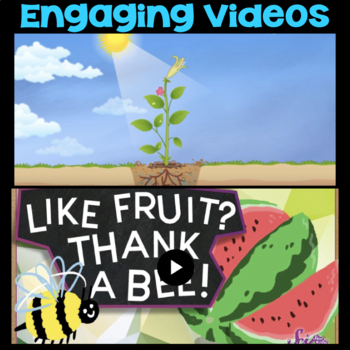 Watch a Video: Plant Parts or Bees - Second Grade Science Stations