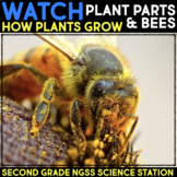 WATCH a Video: Plant Parts or Bees - Science Stations