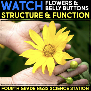 Watch a Video about Flowers and Why We Have Belly Buttons - Structure & Function