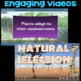 Watch a Video about Plant Adaptations or Natural Selection