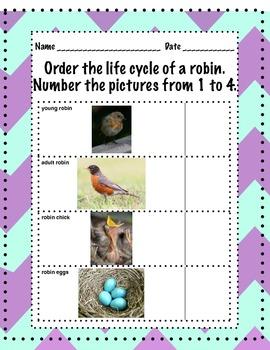 Watch the Bird Grow Lifecycle of a Robin Bird