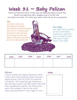 Water Babies - a week by week pregnancy calendar !