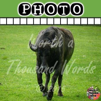 Photo: Water Buffalo