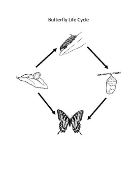 Water & Butterfly Cycle