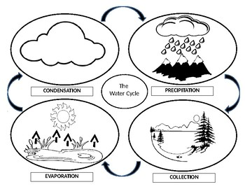Water Cycle Activity