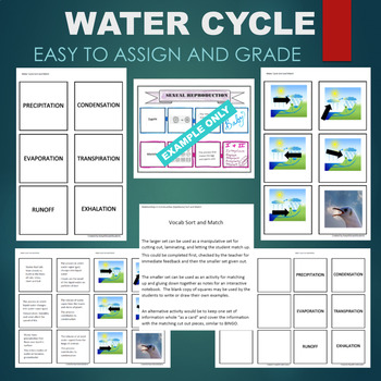 Water Cycle (Condensation, Precipitation, Evaporation) Sort and Match Activity