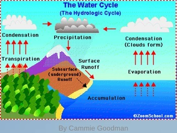Water Cycle UNIT PowerPoint and Interactive Notes 4th Grad