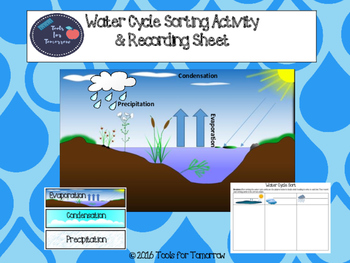 Water Cycle Sorting Activity