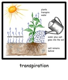 Water Cycle Unit grades 4 5 6