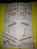 Water Cycle Visual Organizer