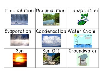Water Cycle Vocabulary Cards & Activity