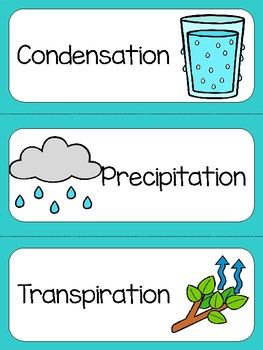 Water Cycle and Oceanography Word Wall and Card Sort