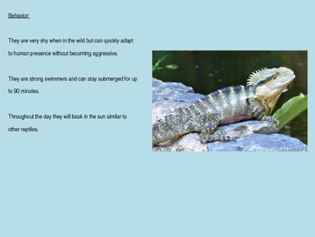 Water Dragon - Power Point information facts pictures