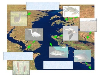 Water:  Estuary Diagrams and Biology Overview (Great COLOR Maps!)