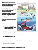 Water Pollution: Biomagnification, Acid Rain, Runoff (Living Environment / ESL)