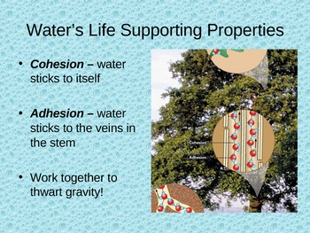 Water: Properties That Make It Essential to Life