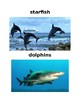 Water Words and Picture Vocabulary Cards