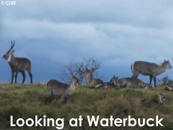 African Animals: Antelope: Waterbuck - PDF Presentation