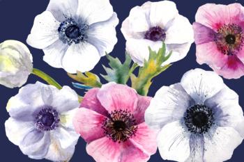 Watercolor Anemone Flowers Clip Art Set