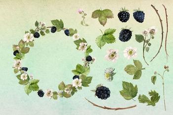 Watercolor Blackberries Clip Art