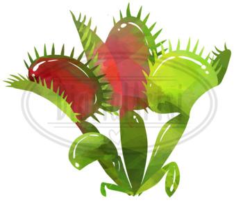 Watercolor Carnivorous Plants Clipart