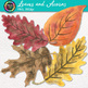 Watercolor Fall Leaves and Acorns Clip Art {Great for Autumn Classroom Decor}
