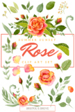 Watercolor Floral Clip Art - Summer Sunset Rose