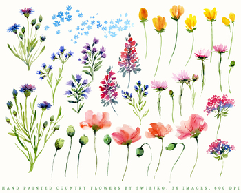 Watercolor Garden, flowers, contry style, poppies, cornflowers, daisies