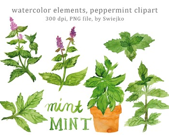 Watercolor Herbs, Floral Clip Art, Watercolor Leaves, Mint, Peppermint