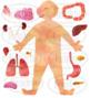 Watercolor Human Digestive Anatomy Clipart