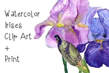 Watercolor Irises Clip Art + Print