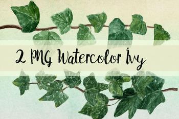 Watercolor Ivy Clip Art - 2 PNG