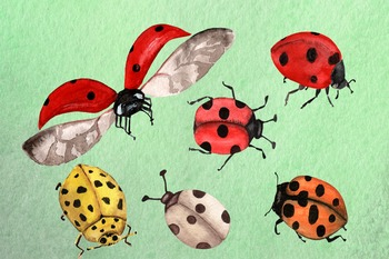Watercolor Ladybugs Clip Art - Hand-painted