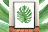 Watercolor Monstera Leaf Clip Art and Print