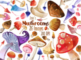 Watercolor Mushrooms Clipart