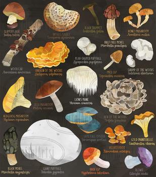 Watercolor Wild Edible Mushrooms Clipart