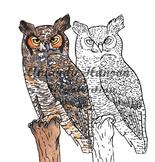 Watercolor Owl Clip Art Pack