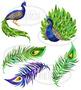 Watercolor Peacocks Clipart