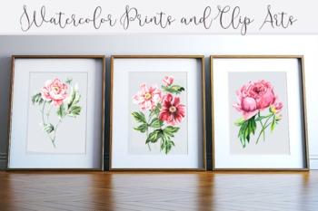 Watercolor Peonies Prints & Clip Arts
