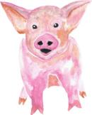 Watercolor Pig