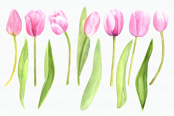 Watercolor Pink Tulips Clip art Set