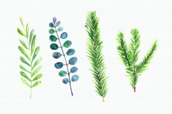 Watercolor Poinsettia Clip Art Set