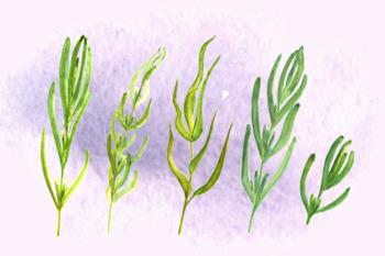 Watercolor Provence Clip Art Set