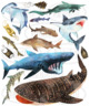 Watercolor Sharks Clipart