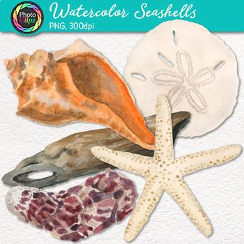 Watercolor Shells Clip Art {Hand-Painted Seashells, Starfish, Coral, Driftwood}