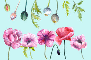 Watercolor Summer Poppies - Wreath and Border