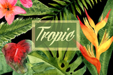 Watercolor Tropic Clip Art