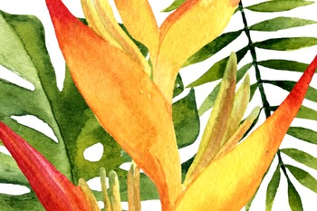 Watercolor Tropic Clip Art
