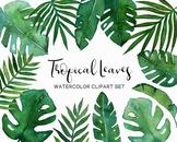 Watercolor Tropical Leaves, Monstera, Palm, Banana leaf